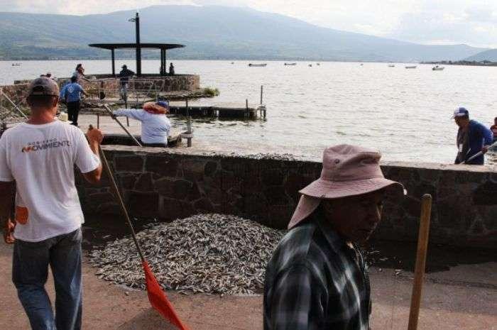 Екологічна трагедія в мексиканській озері Кахититлан (19 фото)