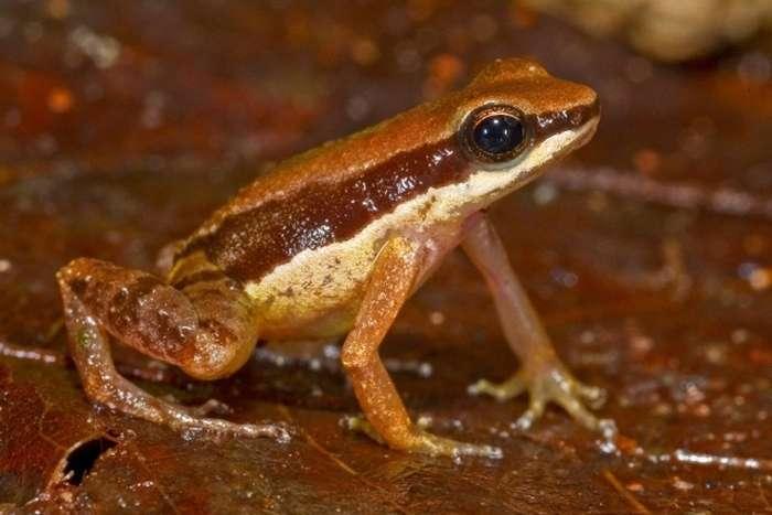 У джунглях Амазонки знайшли нові види флори і фауни (10 фото)