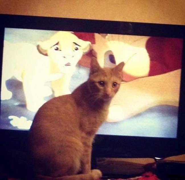 Засмучений кіт (3 фото)