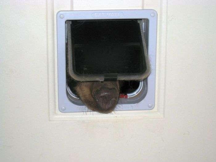 Американець виявив у своєму будинку ведмедя, який застряг головою в котячої двері (4 фото)