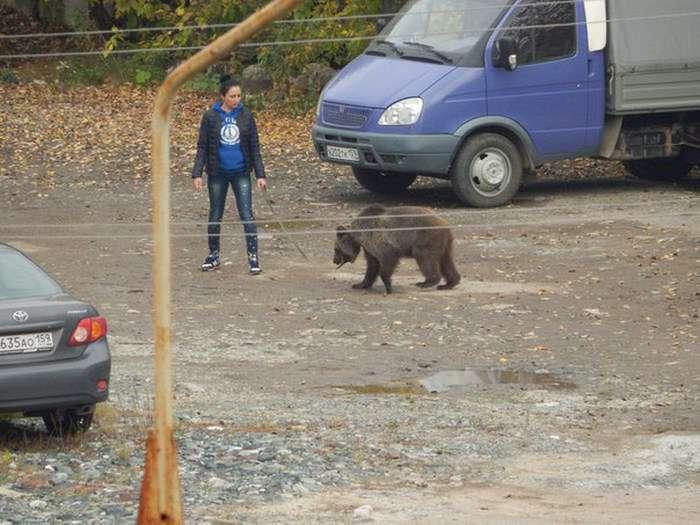 У Пермі дівчина вигулювала ведмедя на повідку (4 фото)