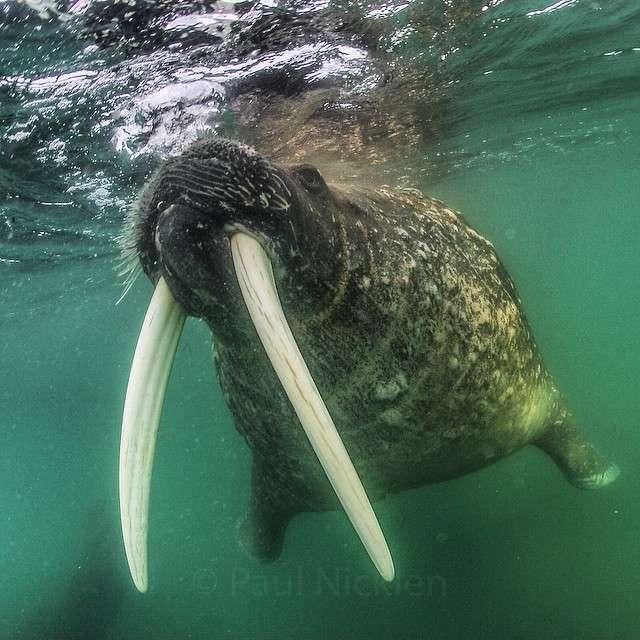 Чудові фотографії дикої природи (33 фото)
