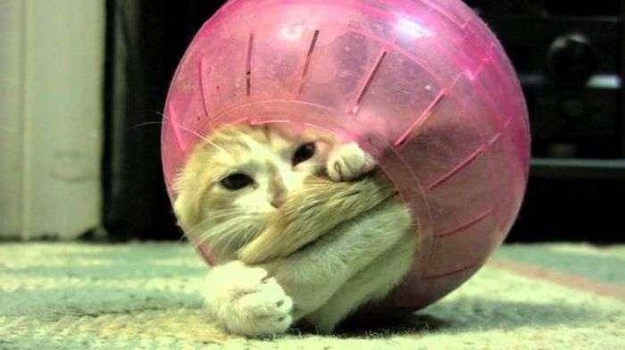 Застряглі коти (21 фото)