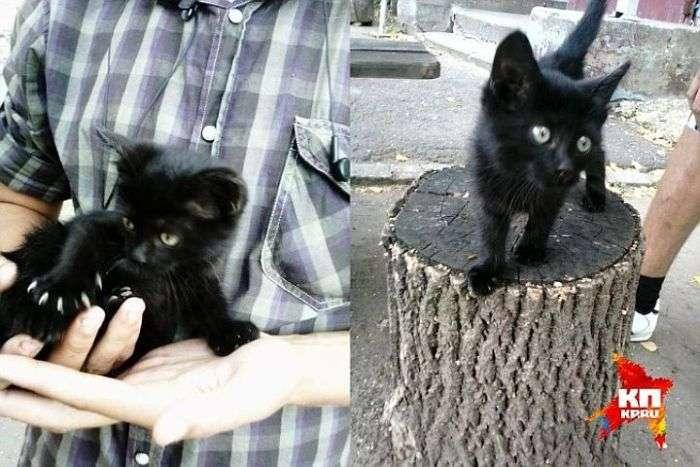 В Балаково учні початкової школи звірячому вбили кошенят (2 фото)
