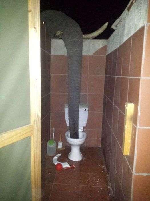 У Ботсвані слони перетворили громадський туалет в місце для водопою (4 фото + відео)