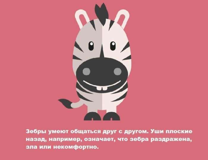 Маловідомі факти про тварин (13 картинок)