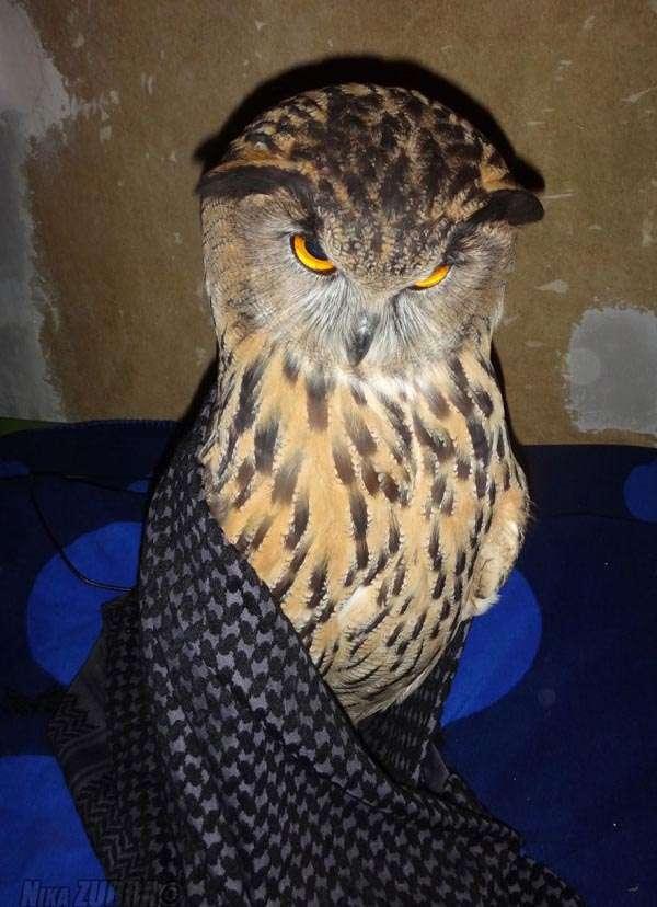 Забавна сова (6 фото)