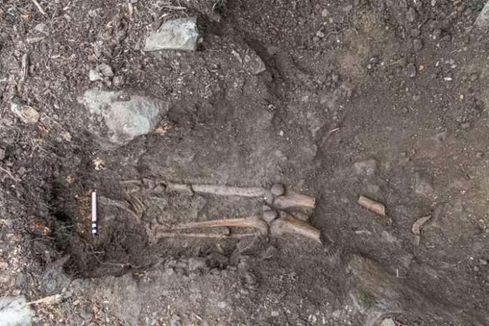 В Ірландії під поваленим деревом виявили древню могилу (2 фото)