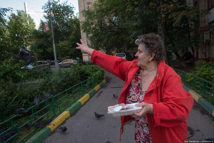 Голуби в одному з дворів Москви (12 фото)