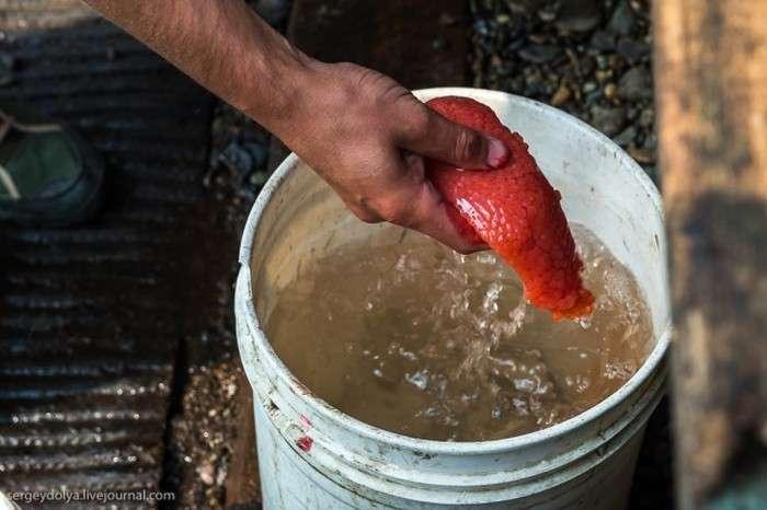 Як роблять червону ікру-пятихвилинку (20 фото)