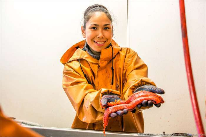 Як виробляють червону ікру (54 фото)