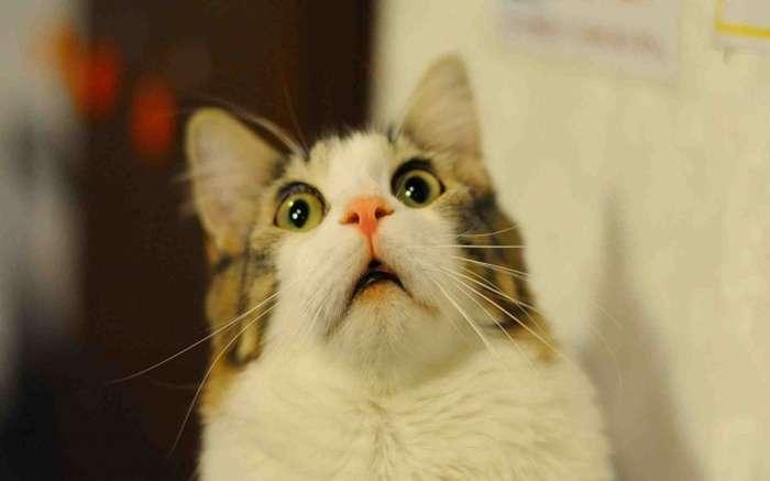 Забавні коти, які ведуть себе зовсім, як офісні працівники (15 фото)