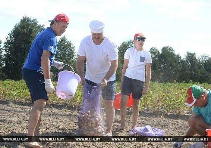 Олександр Лукашенко з сином зібрав урожай картоплі в резиденції «Дрозди» (6 фото)
