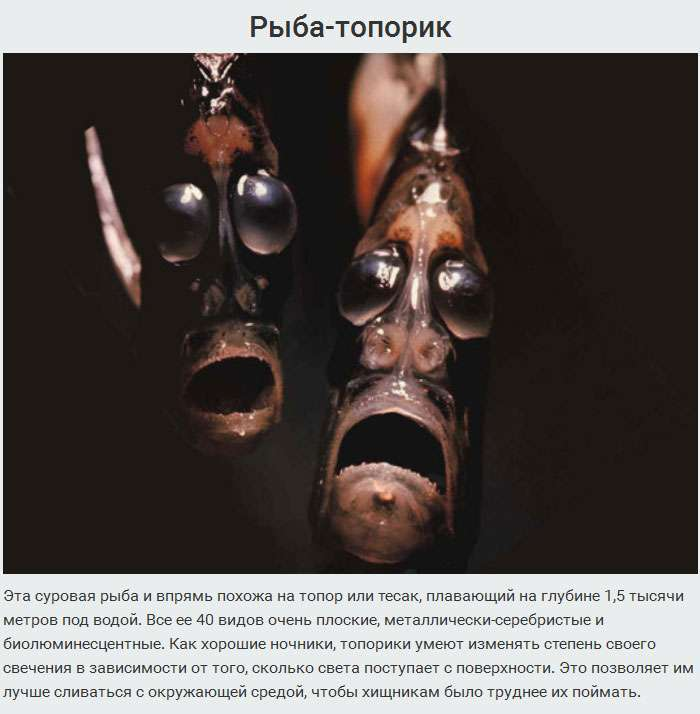 10-ка самих дивних мешканців Маріанського жолоба (10 фото)