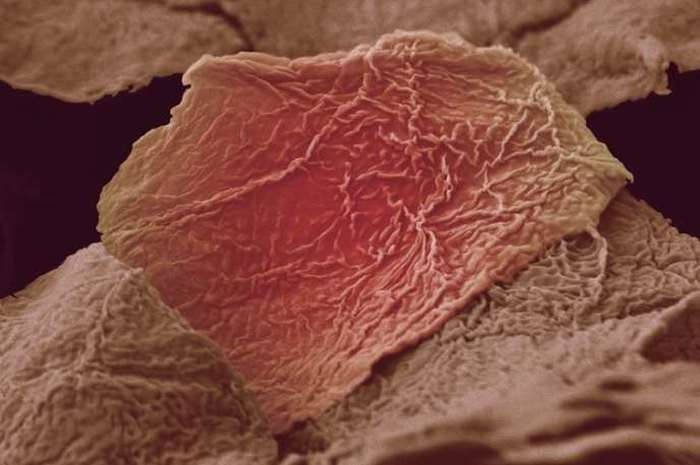 Частини нашого організму під мікроскопом (18 фото)