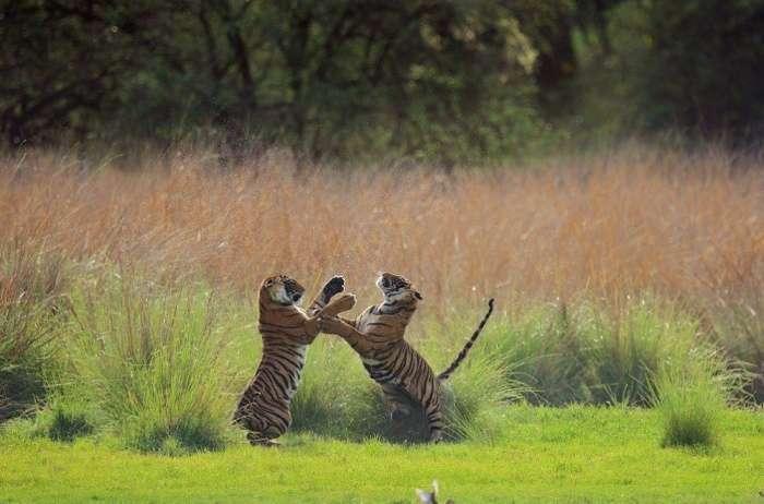 Кращі знімки фотоконкурсу National Geographic Photo Contest 2015 (26 фото)