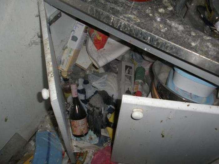 У Словенії дівчина перетворила орендовану квартиру в голубник (8 фото)