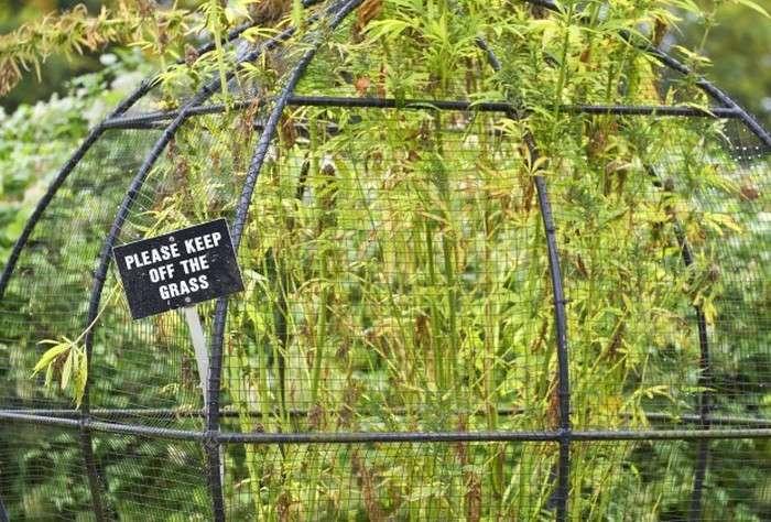 Віртуальна екскурсія по отруйному саду Альнвика (4 фото)