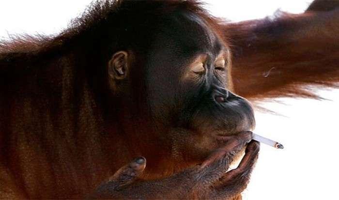Дивовижні факти у поведінці тварин (25 фото)