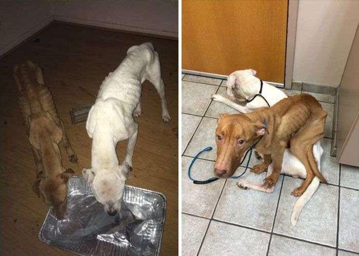 З ходячих скелетів у здорових і життєрадісних собак (6 фото)