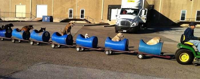 Літній американець зібрав саморобний поїзд і катає на ньому бродячих собак (5 фото)