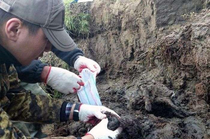 У Сибіру виявили муміфікованого цуценя віком 12 000 років (8 фото)