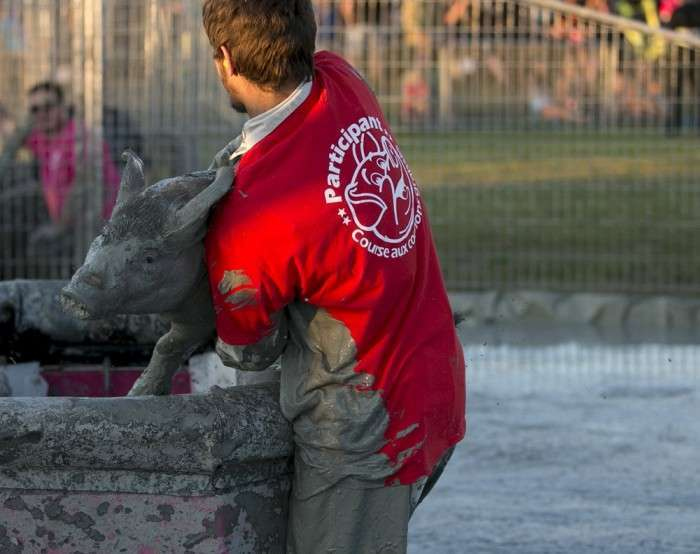 Кумедний канадський фестиваль Festival du Cochon (11 фото)