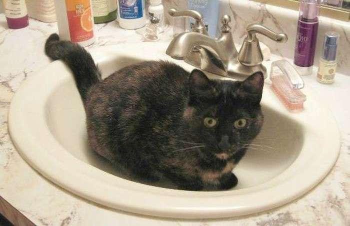 Корисні лайфхаки для господарів кішок (29 фото)
