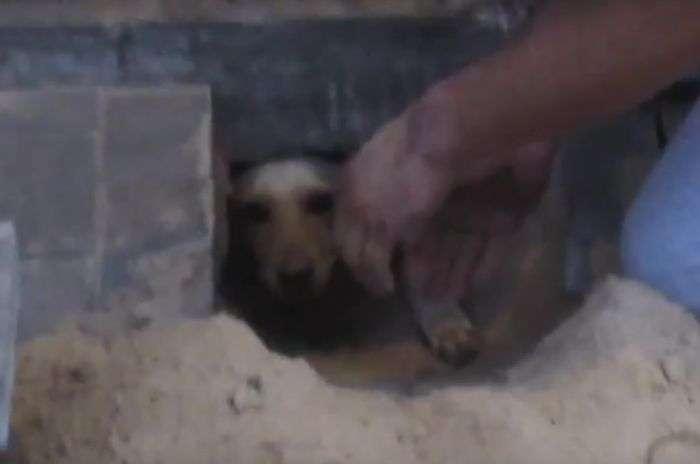 У Воронежі врятували замуровану собаку (4 фото + відео)