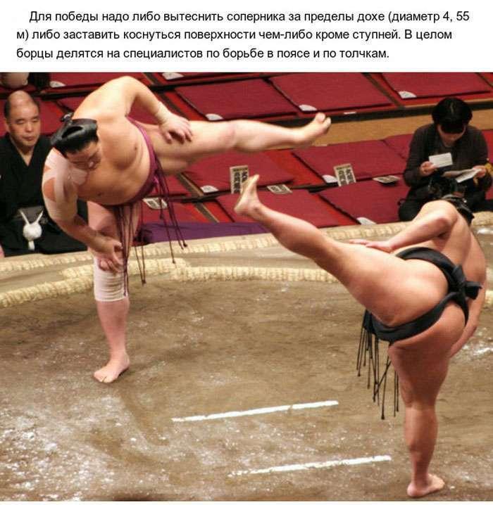 Цікаві факти про сумо (10 фото)