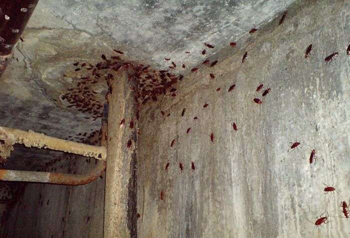 Обивателі московських підвалів (3 фото)