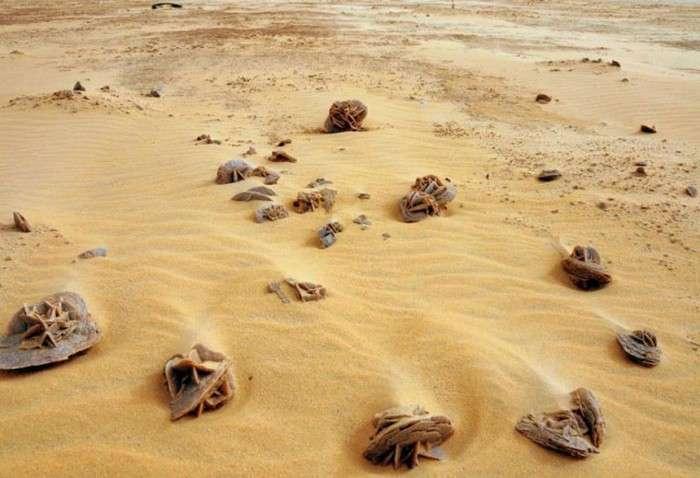 Екзотичний сувенір – кристал «троянда пустелі» (11 фото)