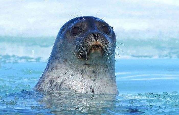 Неймовірні краси Арктики, яких незабаром може не стати (10 фото)
