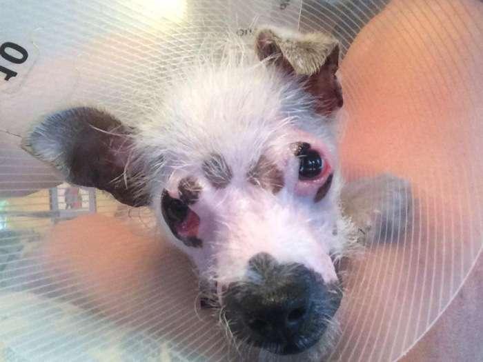 Американська сімя взяла собаку з притулку, незважаючи на її недуга (7 фото)