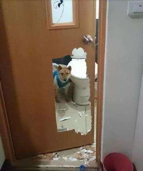 Собака, замкнена в туалеті (3 фото)