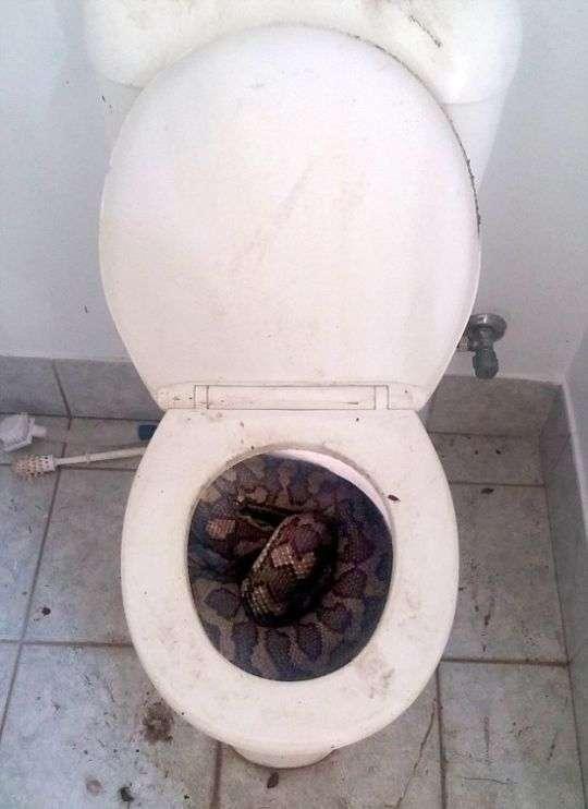 Звичайне видовище в австралійському туалеті (4 фото)
