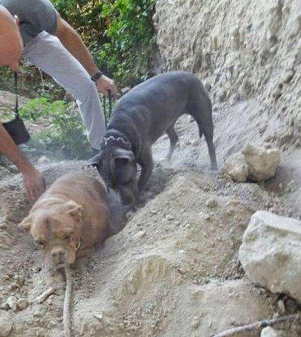 У Франції вимагають суворого покарання для хлопця, живцем закопав собаку (4 фото)
