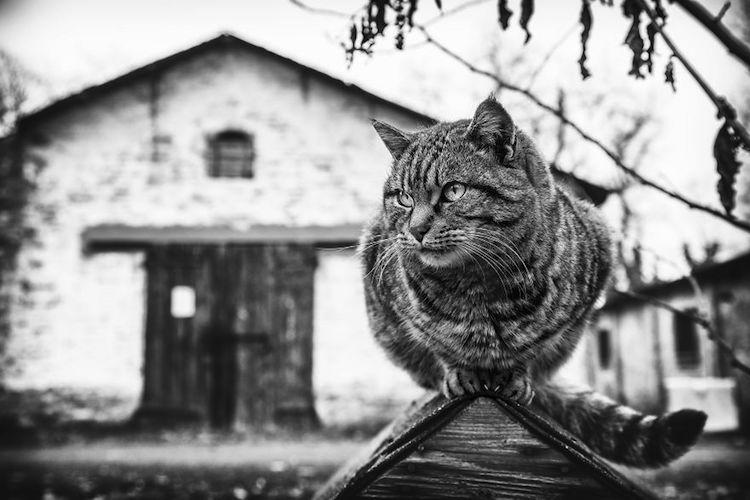 Без кота и жизнь не та: уравновешенные коты-акробаты демонстрируют чудеса баланса зверушки,живность,питомцы,Животные