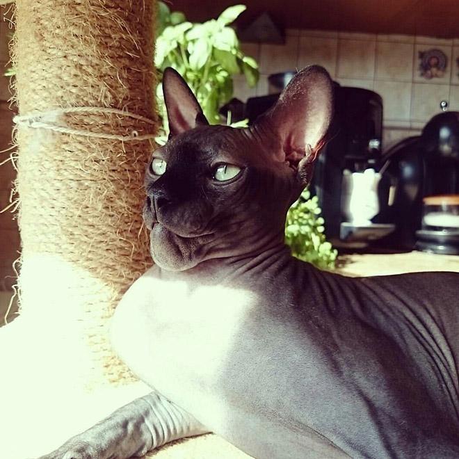 12 фото отважных котов, проигравших в битве с осами Приколы,pin,коты,неудачи,осы,фото
