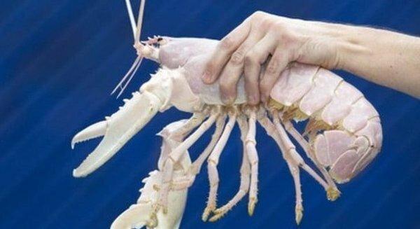 Единственные экземпляры необычных животных на Земле Интересное