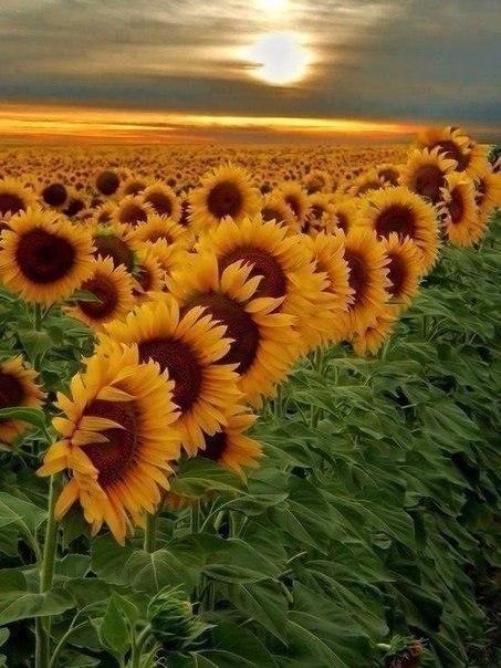 Красивые фотографии и позитивные картинки для улыбки красивые фотографии,прикольные картинки,шикарные фотографии