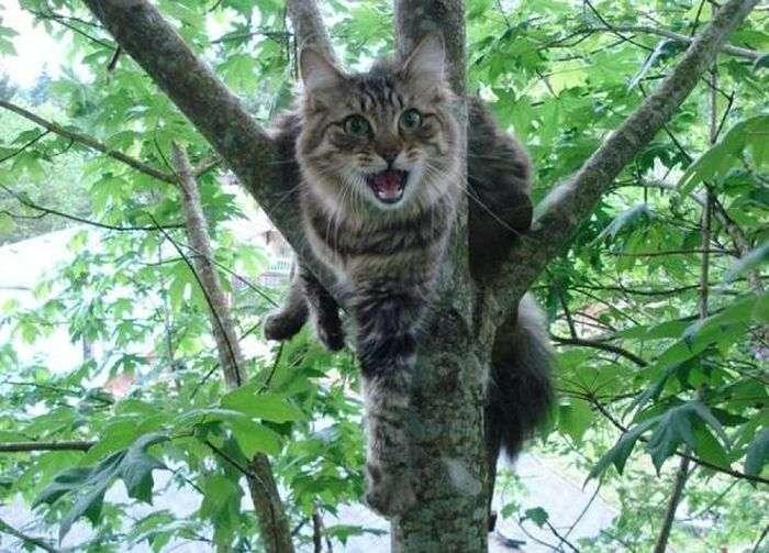 Франківським «надзвичайникам» довелось рятувати кота